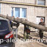 Кронировка и спил деревьев в Александрове