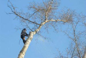 Спил деревьев Александров