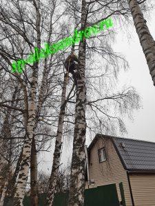 Удаление дерева методом альпинизма